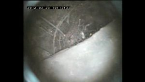 Chimney flue blocked by birds nest |  Chimney CCTV finds birds nest in flue